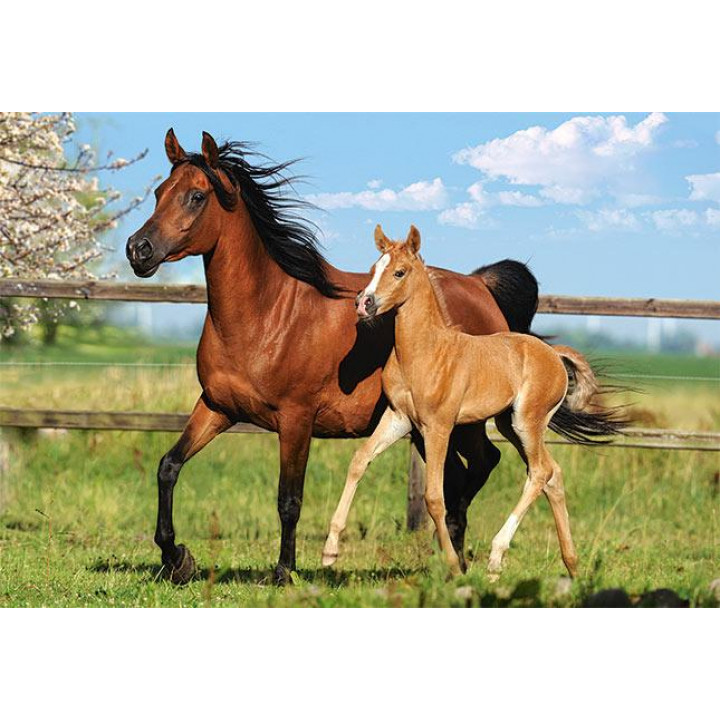 Пазл Mare And Foal, 260 елементів